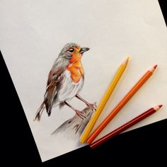 #redbreast #robin #bird #animal #tattooidea #draw #art