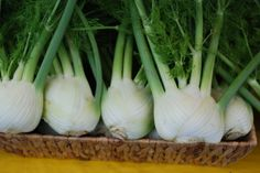 Fennel | Rabbit Fields Farm