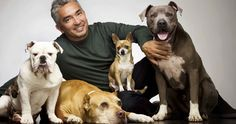 'Dog Whisperer' Cesar Millan Accused of Animal Cruelty -- Cesar Millan, known as the 'Dog Whisperer', had his home investigated this past week on suspicion of animal cruelty. -- http://movieweb.com/dog-whisperer-cesar-millan-investigation-animal-cruelty/
