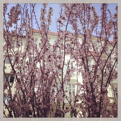 Berlin in Spring :)  by Wesna Wilson