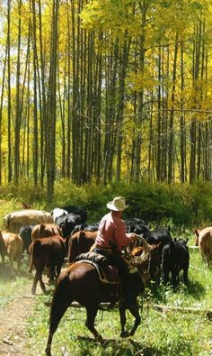 from Wagner Cattle Company, Colorado mountain cattle drive-would actually really like to do this someday!