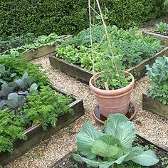 Fall Vegetable Garden.. the time is now to get started on the fall garden.