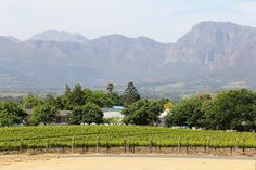 The Best of Cape Town, South Africa, in 10 pictures. Wine lovers (and others) Stellenbosch, at the heart of the Winelands is a must-see. Windsor Hotel, Living In New Zealand, Wildlife Safari, Cape Town South Africa, Victoria Falls, 10 Picture, Best Cities, Historical Sites, National Parks