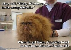 Silly Cat Pictures With Captions   funny cat photo with captions what is vet doing behind the cat