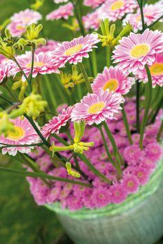 Closeup gerbera bouquet close to the beach #pinkegerberas #whitegerberas #inspiration #colouredbygerbera #dutchgerbera