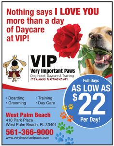 Doggie Daycare at VIP.  The best.