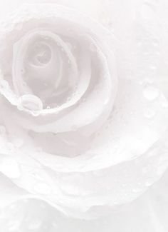 Beautiful Light Pink and Black Weddings Shades Of White, Shades Of Purple, All White, Pure White, White Stuff, Ronsard Rose, Blanco White, White Aesthetic, Aesthetic Pics