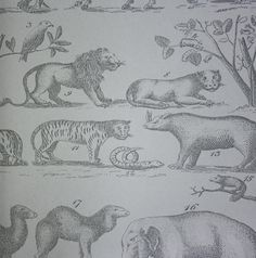 Ark Wallpaper A vintage hand drawn style wallpaper featuring jungle animals in charcoal on steel.