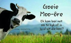 Free Image on Pixabay - Animal, Cattle, Close-Up, Cow Good Morning Good Night, Good Morning Wishes, World Vegan Day, Field Wallpaper, Tax Day, Goeie More, Afrikaans Quotes, Spa Services, Godly Man