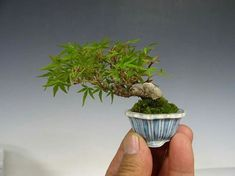 Terrarium Plants, Bonsai Plants, Bonsai Garden, Moss Garden, Garden Art, Mame Bonsai, Bonsai Styles, Miniature Trees, Tree Care