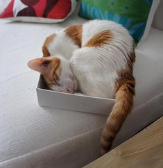contortionist...as is every cat I've even loved