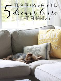 5 tips to make your dream home pet friendly| keep your home stylish even with dogs | the grey door cottage |