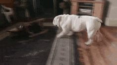 This dog has some skills lol! Funny Animal Memes, Funny Animal Videos, Funny Animals, Cute Animals, Funny Gifs, I Love Dogs, Puppy Love, Cute Dogs, Cane Corso