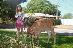 Raising Cows in the City...What We've Learned