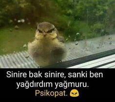 Funny Share, Im Depressed, Meaningful Words, Beautiful Places To Visit, Funny Moments, Good Times, Funny Animals, Funny Jokes, Haha
