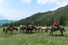 Saddle and Packhorses ready to leave camp for another day of riding in Gorkhi Terelj National Park, Mongolia, with Stone Horse Expeditions & Travel.  #travel, #Vacation, #vacation-ideas, #outdoor, #photography, #horses, #Mongolia, #trekking, #Asia, #adventure-travel, #eco-travel. www.stonehorsemongolia.com