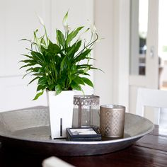 http://easy-indoorplants.com >> Elke plant wordt geleverd in een stijlvolle pot met het unieke Waterfresh® watergeefsysteem. Deze geeft je plant automatisch water wanneer hij dorstig is.