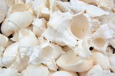 1 Gallon of white seashell mix perfect for your beach wedding, crafts, or home décor! You will receive approx 4 lbs (approx 100 shells) of