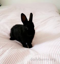 Bunny gets acquainted with her new life - July 19, 2016 - More at today's Daily Bunny post: http://dailybunny.org/2016/07/19/bunny-gets-acquainted-with-her-new-life/