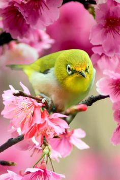 Download Free Cute Bird On Pink Flowers IPhone Wallpaper Mobile Contributed By Romeo56