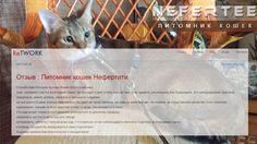 """Приятно на просторах интернета встретить отзывы о работе питомника редких пород кошек Nefertee. Вот один из отзывов, который сегодня попался на глаза.❤️👌 """"Отзыв : Питомник кошек Нефертити  Спасибо Вам большое за нашу Ясмин.(Египетский мау) Она - огромное счастье всей нашей семьи. Не проходит и дня, чтобы она нас чем-то не удивила, рассмешила или порадовала. Это непередаваемо красивое, грациозное, умное, доброе, ласковое и преданное создание, на чьи шалости даже злиться невозможно. Мы даже…"""