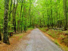 Crowder's Mountain State Park. Crowder's Mountain, North Carolina.