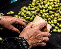 Stone creushed olives in Palestine زيتونا