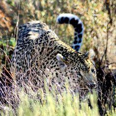 Luke de Villiers _ Photography #Luke de Villiers #Photography #Rasberydays #theotherbarman #Africa Luke, Africa, Animals, Animales, Animaux, Animal, Animais, Afro