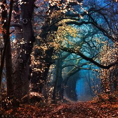Mystic Netherlands Man can not imagine anything more beautiful than what God has already created. Beautiful World, Beautiful Places, Tree Forest, Magical Forest, Forest Light, Forest Path, Electric Forest, All Nature, Amazing Nature