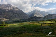 Potato field in the mountainous region of Tajikistan. Paramountjourney.com