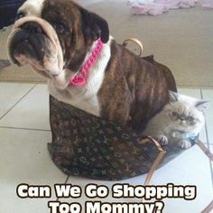 with you all in the shopping bags it's difficult...(ha ha)