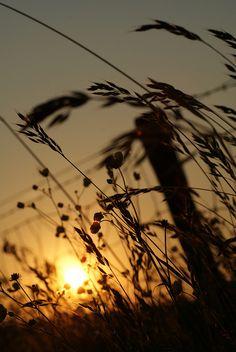 by gemmatus, via Flickr