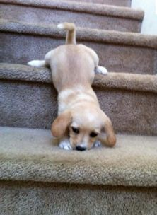14 Puppies That Could Use A Little Help