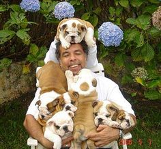 This is heaven on earth...#English #Bulldogs