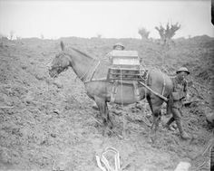 WWI, 31 July 1917; British troops loading ammuniton pack horse in a shell crater near Pilckem. ©IWM  (Q 5716)