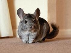 Unusual pets that are legal to own - Photo 1 - Pictures - CBS News