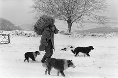 George Ayre with hay for sheep by James Ravilious © Beaford Arts Hunters In The Snow, Northern England, Snow Dogs, Gothic Horror, Painting People, Dog Years, Wild Horses, Dog Friends, Dog Pictures
