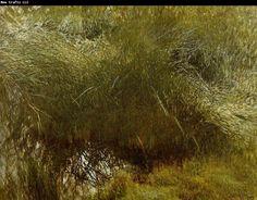 bruno liljefors | bruno liljefors vassbunke