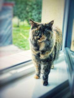 The wild spirit || The Cat and The Dog – Nigri Felis
