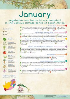 Growing your own organic delicious food is most rewarding! These educational Moonbloom posters will help guide you. South Africa Honeymoon, Vegetable Garden, Delicious Food, Herbs, Gardening, Posters, Organic, Vegetables, Plants