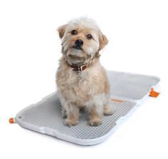 Shake Dog Potty from Modko