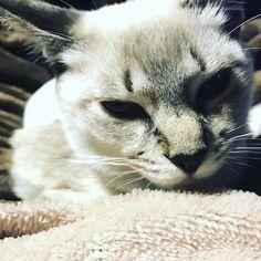 #モルガさん の#FIP 血液検査の結果が出ました6000で #猫コロナウィルス 陽性でしたそして決して良い数値ではありません感染しているのはわかっていたのですが目の当たりにするとやはり悲しいですね #ねこ によって発病するしないはあります 私はまだ症状が出ていない状態で 症状を抑える #インターフェロン注射 を打ち続ける事はしない という判断を自分で下しました 通院は通っている人々の心を痛ませます 私自身が年以上難病の #潰瘍性大腸炎 を抱えていて治らないという苦しみを知っているから  発病を抑えるだけのクスリ治らない病それを一生持ち続け治療を続けるという事 毎日20粒以上の薬と副作用で苦しむという事 だから思うのです 何も知らない子達にみんながしているからと言う愚かな考え方で広めるいう恐怖 自覚をしないという思考を止めた考え方 永遠に治らない病気を自分で体験しないとわからない事だろうと思います 私の判断は私の責任 飼い主の責任  動物いえ生き物と向き合うなら少しでも胸に止めて欲しい 全く届いていないかな 私にできる事 今以上にモルガさんを愛してあげる事 それだけだと思います…