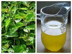 Canning Pickles, Torte Cake, Alternative Medicine, Drinking Tea, Preserves, Wine Glass, Herbalism, Food And Drink, Smoothie