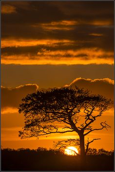 African sunset in Rainford by Pete Rowbottom. African sunset in Rainford by Pete Rowbottom. Amazing Sunsets, Amazing Nature, Nature Pictures, Cool Pictures, Sunrise Pictures, Landscape Photography, Nature Photography, African Sunset, Image Nature