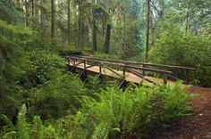 Camp at Jedediah Smith Redwoods State Park, Crescent City, California - Bucket List Dream from TripBucket