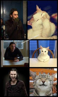 Aidan and cats... <3 - from Aidan Turner Brasil/facebook