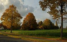Herbstspaziergang - Argestorf