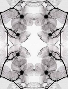 xray flower awesome art picture and wallpaper