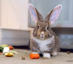 Bunny and a carrot.