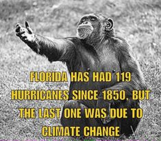 Florida has had 119 Hurricanes since but the last one was due to climate change Liberal Hypocrisy, Liberal Logic, Political Quotes, Conservative Politics, Truth Hurts, Adult Humor, Global Warming, That Way, Climate Change